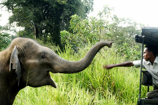 Wasgamuwa National Park Map Elephants in Wa...