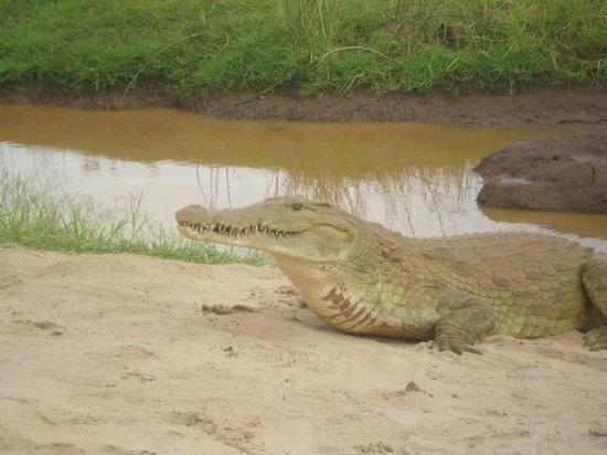 In2kenya: all'entrata del parco lungo il fiume Tsavo