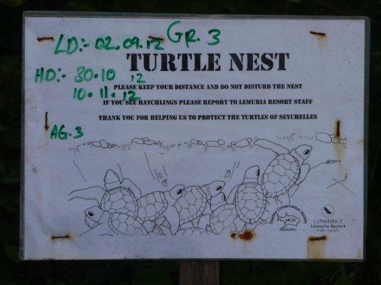 Anse Georgette: Turtle Nest
