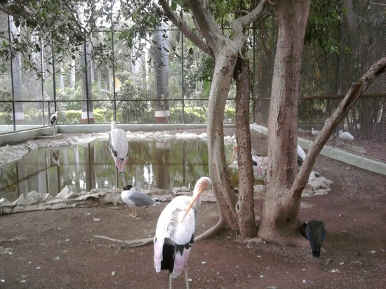 Junagadh, India: flamingo