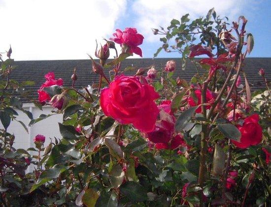 Keisei Rose Garden : 入り口付近