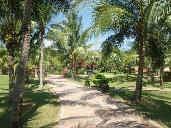 Pandanus Resort: Otoczenie Hotelu Grudzień 2012