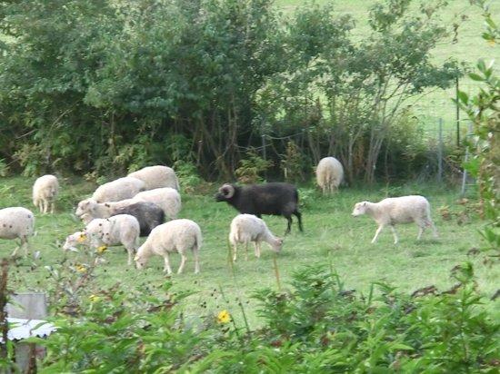 Relais de la Renaissance: Teil der Schafherde, die zum Haus gehört