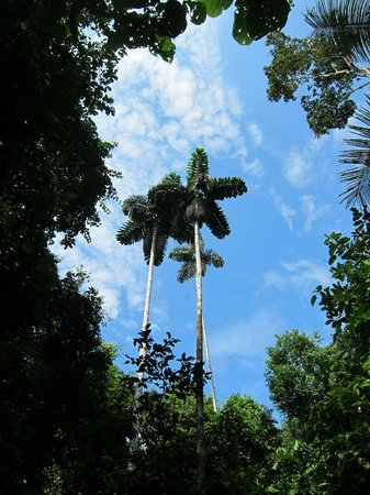 La Selva Amazon Ecolodge: Blue sky and tall palms in the jungle