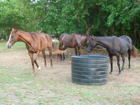 Being with Horses: Time to unwind!