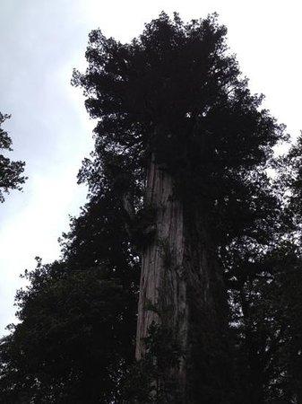Pumalin Park: sendero los alerces