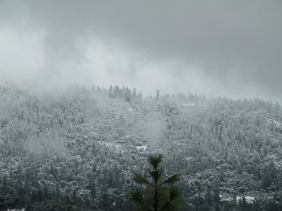 Evergreen Haus: Beautiful, snowy morning...view from the deck