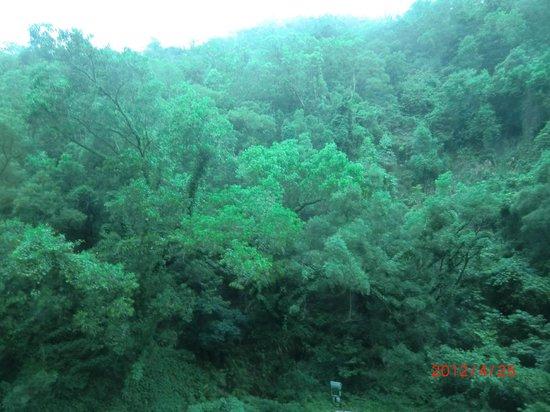 Grand Bay View Hotel: 裏側は森でした