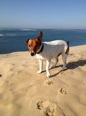 Chateau Bellevue: Doggy on the beach
