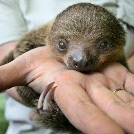 Rainier, OR: ZWCC's The Sloth Center