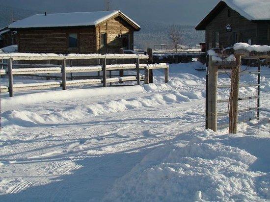 Morley's Acres Farm and Bed & Breakfast: Winter Wonderland