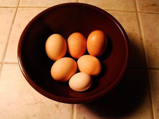 Morley's Acres Farm and Bed & Breakfast: Farm Fresh Eggs