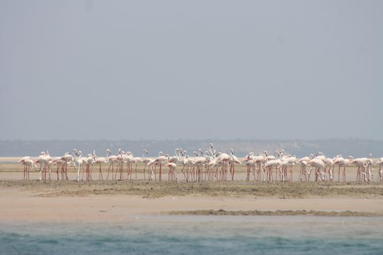 Casa Rex Boutique Hotel by Sol Resorts: Pink Flamingos