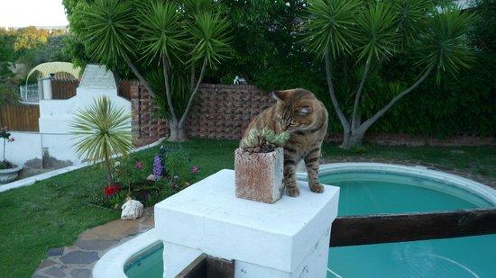 Terra Bianca Guest House: Die Katze Yuka