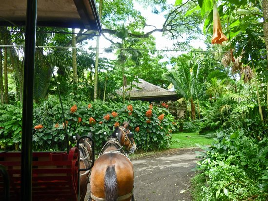Waipi'o Valley Wagon Tours: Local greenery and fruits