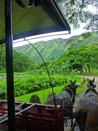Waipi'o Valley Wagon Tours: Discovering lush greens