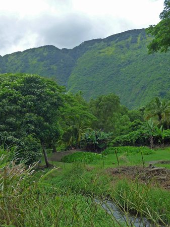 Waipi'o Valley Wagon Tours: View from the wagon