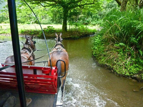 Waipi'o Valley Wagon Tours: Your trustful mules