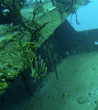 Scuba Playa Dive Shop : Wreck 05