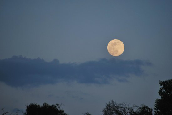 Wildebeest Eco Camp: Full moon rise as seen from the deck.