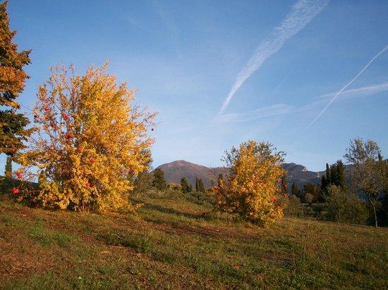Agriturismo Il Cerro : colori d'autunno