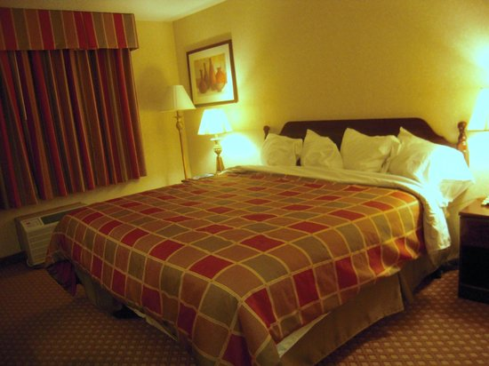 Wyndham Garden Romulus Detroit Metro Airport: King bed was OK