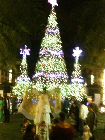 Gulfstream Park: Tree set to music its great to see