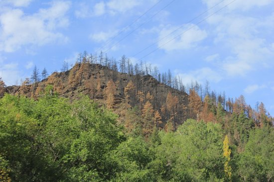 Cache la Poudre Wilderness Area: Aftermath of wildfires