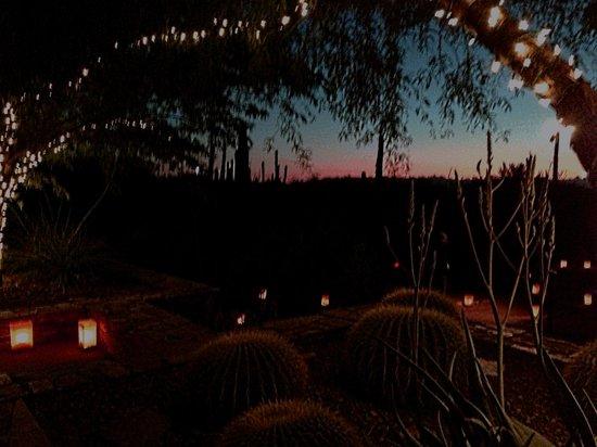 Las Noches De Las Luminarias Picture Of Desert Botanical Garden