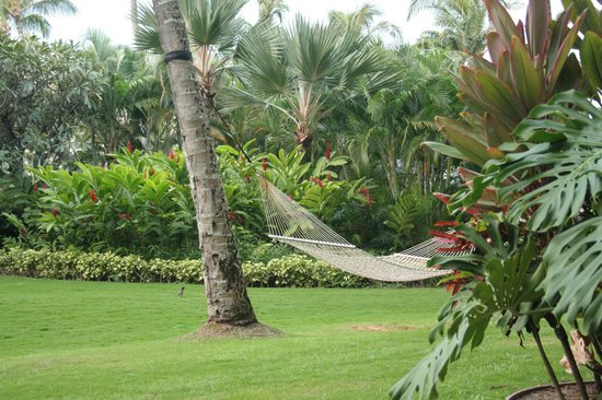 "The Ritz-Carlton, Kapalua: beautiful gardens & ""our"" hammock"