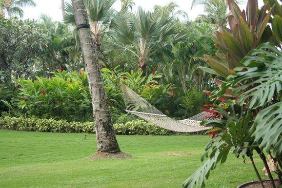 """ذا ريتز كارلتون كابالوا: beautiful gardens & """"our"""" hammock """