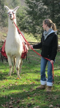 "Smoky Mountain Llama Treks - Day Tours: Abu ""talking"" about the Trek!"