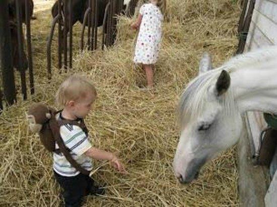 Agriturismo Torrevecchia: Meeting the farm animals