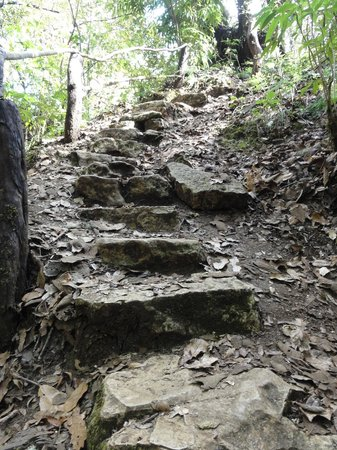 Orquideas Moxviquil: steps up from the caves
