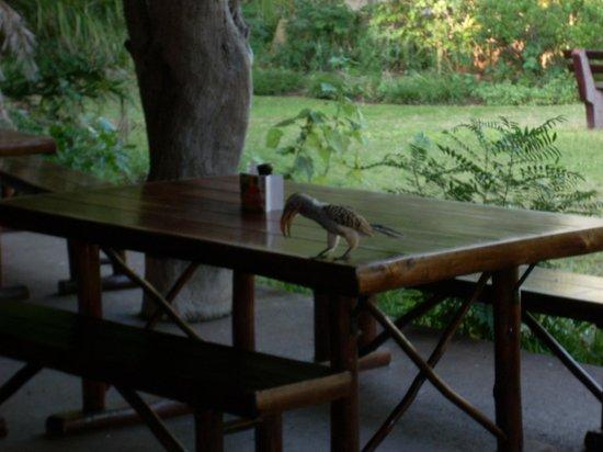 Satara Rest Camp: Comedor