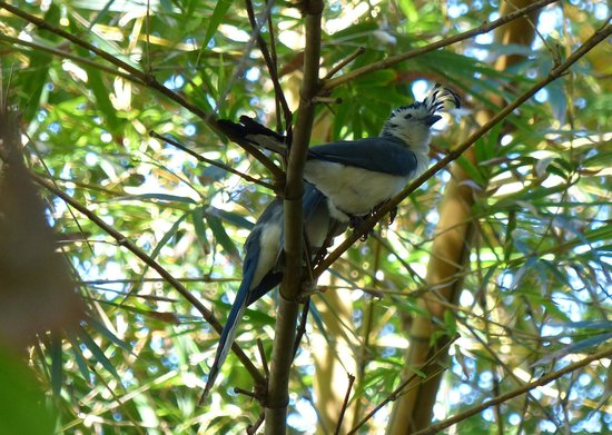 Villas Hermosas: Stunning magpies