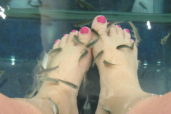 Athens Doctor Fish - Foot Therapy & Day Spa: nice fishys