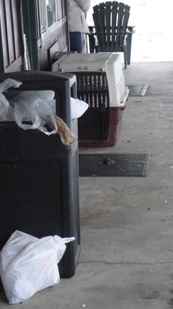 Shasta Inn: dog poo and overflowing trash bins await you