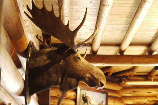 Num-Ti-Jah Lodge: Moose head in dining room