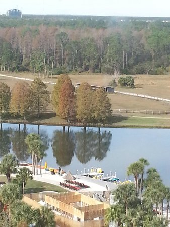 Hyatt Regency Grand Cypress: View