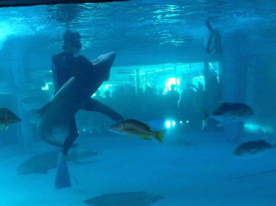 Acuario Mazatlan: Feeding the sharks