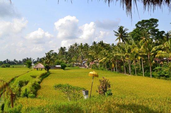 Mathis Retreat: View on rice fields when having breakfast