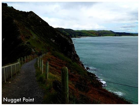 Nugget Point/Tokata Walks: Not all parts of the path is fenced