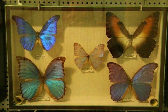 Parc Emmanuel Liais : papillon