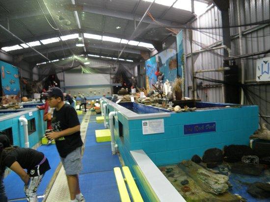 Stanley Seaquarium: inside the seaquarium 