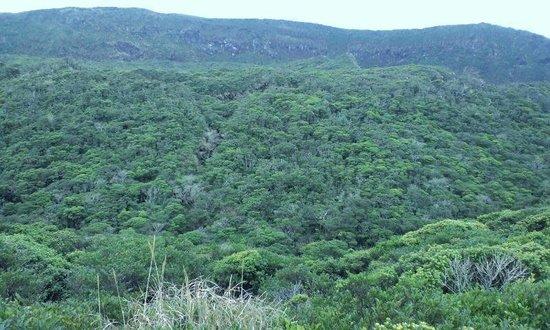 Mt.Nishi: 火口に生える鮮やかな緑