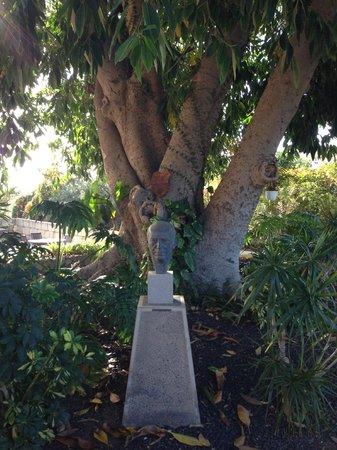 Hotel Rural Finca Salamanca : Beeidruckender Baum (inkl. Büste des ehemaligen Besitzers)