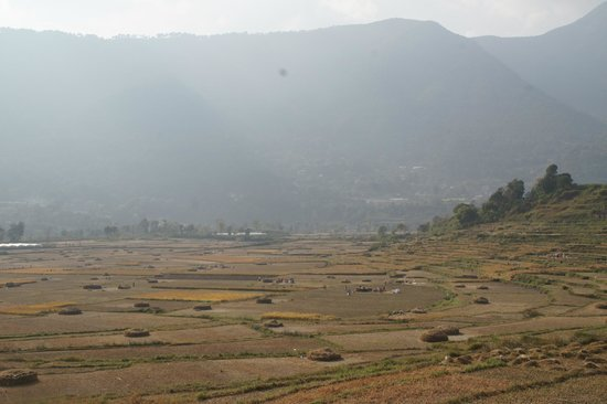 The Little House in the Ricefields: rice harvest / mountain view