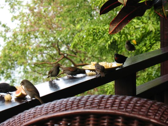 Villa Pomme d'Amour: Our bird friends came for breakfast every morning