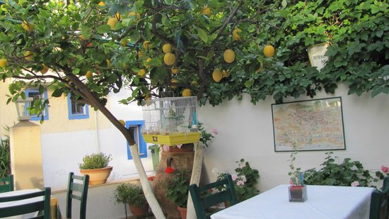 Petrino Garden: ....with grapes and lemons growing in the restaurant